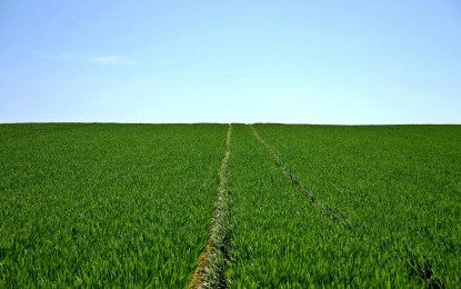 Kömürün Yarattığı Hava Kirliliği Tarımı Etkileyecek!