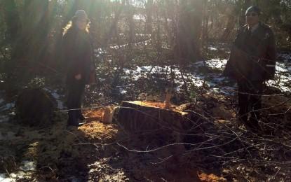 Edirne Ormanları kontrolsüzce katlediliyor