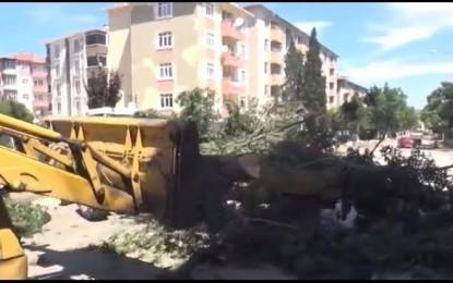 Keşan'lılar ağaçların korunmasını istiyor!