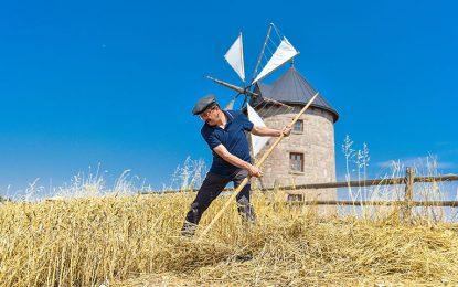 Türkiye'nin ilk açık hava köy müzesi Altınköy'de hasat heyecanı başladı